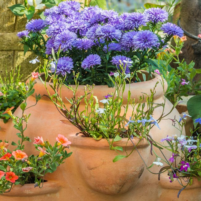 Container Garden Image